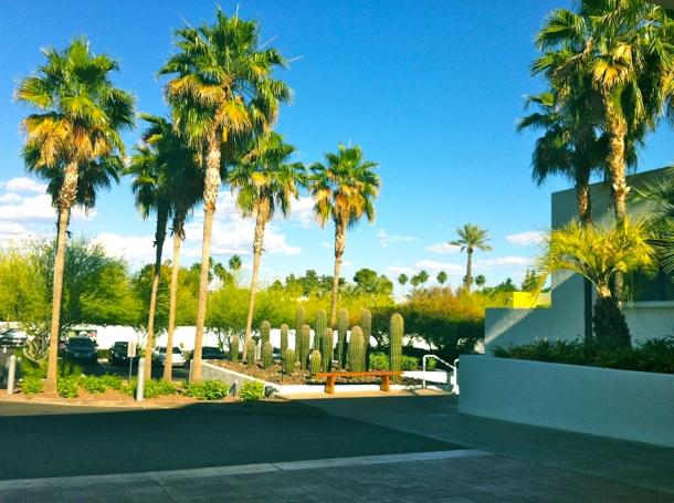 Saguaro Palms