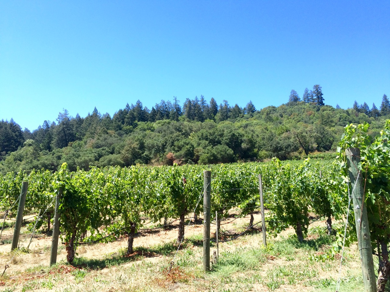 A Weekend in Sonoma Wine Country - A Time To Kale