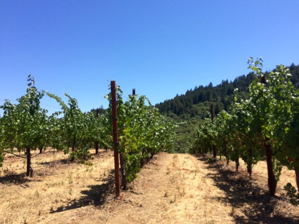 Sonoma Wine Tasting   California Wine Country   Michel Schlumberger